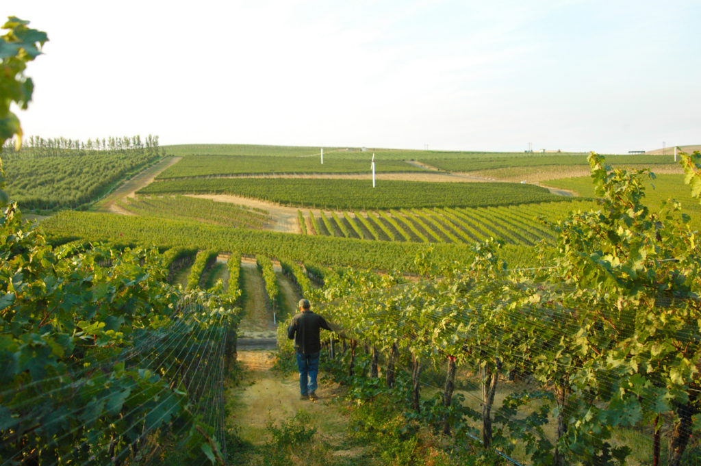 jean-franaois-pellet-in-pepper-bridge-vineyard